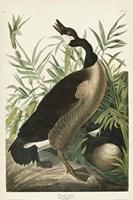 Pl 201 Canada Goose Fine-Art Print