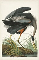 Pl 211 Great Blue Heron Fine-Art Print
