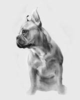 Pug Portrait II Fine-Art Print
