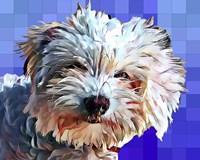 Pop Dog V Fine-Art Print