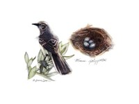 Bird & Nest Study I Fine-Art Print
