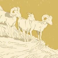 Big Horn I Fine-Art Print