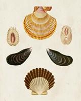 Knorr Shells I Fine-Art Print