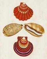 Knorr Shells II Fine-Art Print