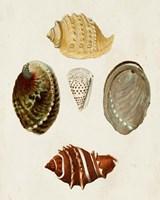 Knorr Shells IV Fine-Art Print