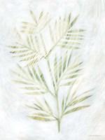 Breezy Fronds III Fine-Art Print