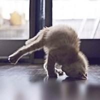 Cat Yoga X Fine-Art Print