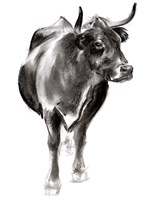 Charcoal Cattle I Fine-Art Print