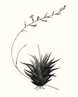 Graphic Succulents I Fine-Art Print