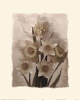 Daffodils I Fine-Art Print