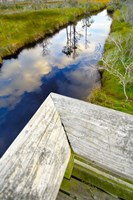 Ward Ware Nature Park, Gulf Shores Alabama Fine-Art Print