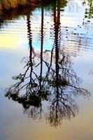 Reflections in a Stream, Ward Ware Nature Park, Gulf Shores Alabama Fine-Art Print