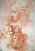 Study of the Heads, c1527 Fine-Art Print
