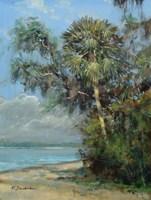 Washington Oaks Fine-Art Print