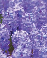 Purple II Fine-Art Print