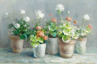 Farmhouse Geraniums Crop Fine-Art Print