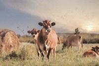 Cow Photobomb Fine-Art Print