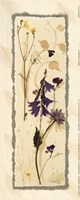 Dried Flowers IV Fine-Art Print