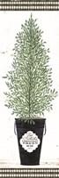 Cedar Tree Fine-Art Print