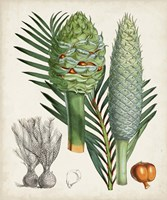 Sago Palms I Fine-Art Print
