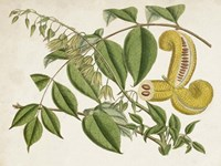 Tropical Foliage & Fruit I Fine-Art Print