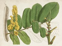 Tropical Foliage & Fruit II Fine-Art Print