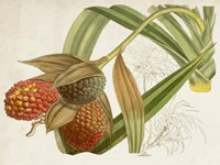 Tropical Foliage & Fruit III Fine-Art Print