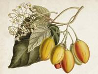 Tropical Foliage & Fruit IV Fine-Art Print
