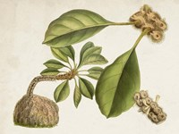 Tropical Foliage & Fruit V Fine-Art Print