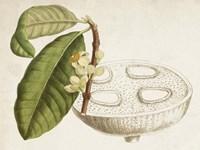 Tropical Foliage & Fruit VII Fine-Art Print
