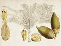 Tropical Foliage & Fruit VIII Fine-Art Print