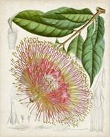 Delicate Tropicals IV Fine-Art Print