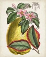 Delicate Tropicals V Fine-Art Print