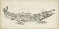 Crocodile Sketch Fine-Art Print