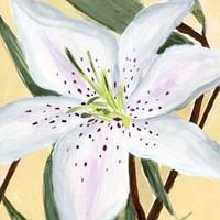 White Lily II Fine-Art Print