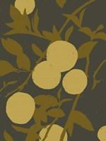 Golden Satsuma I Fine-Art Print