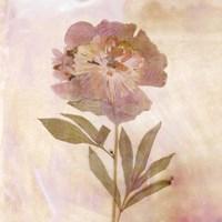 Remembered Flowers II Fine-Art Print