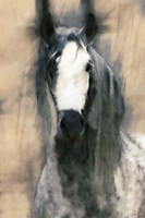 Blended Horse II Fine-Art Print