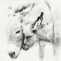 Donkey Portrait III Fine-Art Print