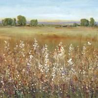 Abundance of Wildflowers II Fine-Art Print