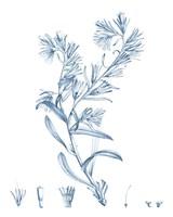 Antique Botanical in Blue II Fine-Art Print