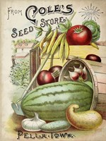 Antique Seed Packets VI Fine-Art Print