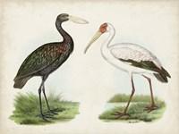 Antique Waterbirds I Fine-Art Print