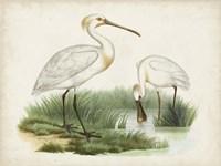 Antique Waterbirds III Fine-Art Print