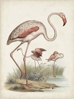 Antique Waterbirds IV Fine-Art Print