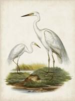 Antique Waterbirds V Fine-Art Print