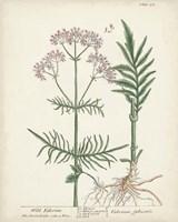 Antique Herbs I Fine-Art Print