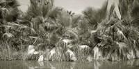Water Palms Fine-Art Print