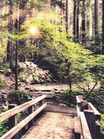 Sunlight on the Forest Path Fine-Art Print