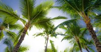 Oahu Palms Fine-Art Print